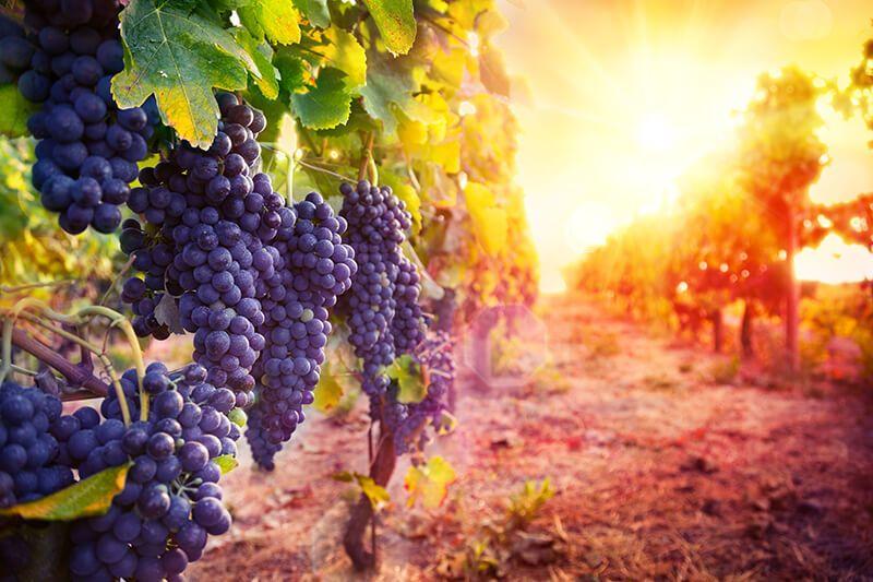 dubrovnik wine tour peljesac peninsula